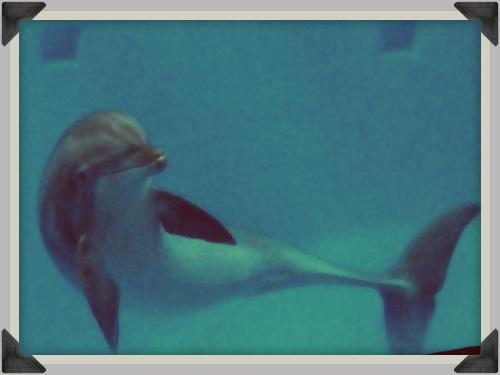 Dolfijn 000b